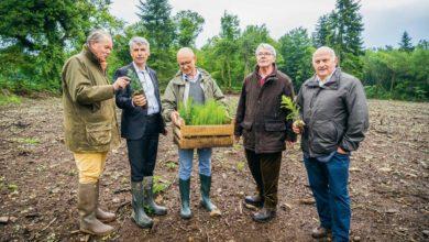 Photo of Le dispositif Breiz forêt bois se simplifie