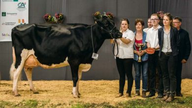 Photo of Prim'Holstein / Terralies 2019 : Stel Epina poursuit sa quête