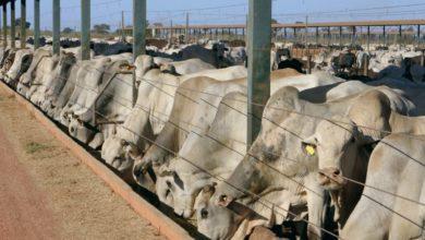 Photo of Mercosur, un accord sur le dos de l'agriculture