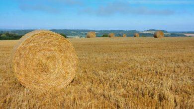 Photo of Paille de céréale : La sécheresse fait flamber les prix