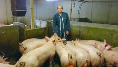Photo of Élevés sans antibiotiques après sevrage