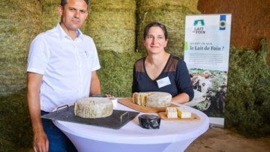 """Photo of Lait de foin : Valoriser ce lait """"haut de gamme"""""""