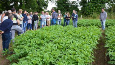 Photo of Légumes et céréales bio cohabitent sur 148 hectares à Elven
