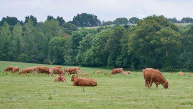 Photo of Quand associations et éleveurs partagent des idées
