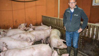 Photo of Le porc charcutier s'adapte au marché
