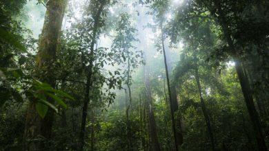 Photo of Rognées, les forêts tropicales n'ont presque plus d'effet positif sur le climat