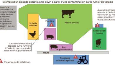 Photo of Botulisme : Des contaminations croisées avec les fumiers de volailles