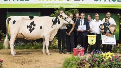 Photo of Prim'Holstein : Duo au sommet pour le Maine-et-Loire
