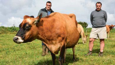 Photo of Un groupe d'éleveurs pour la Jersiaise en Finistère