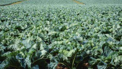 Photo of Des fermes légumières labellisées Haute valeur environnementale