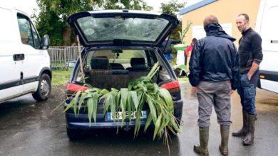 Photo of Des maïs à ensiler à l'heure