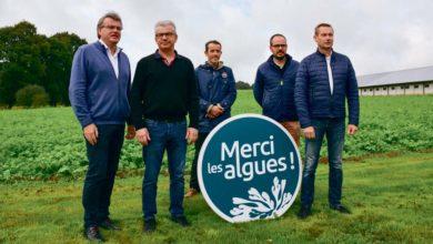 Photo of Des produits à base d'algues en substitution des phytosanitaires