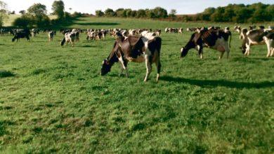 Photo of Réviser l'approche du pâturage au service d'un grand troupeau productif