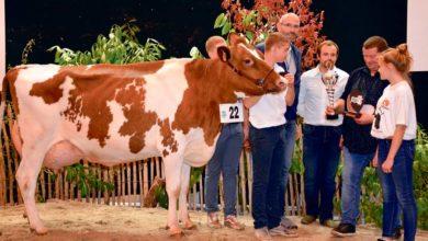 Photo of Concours Pie Rouge, Ohhh la vache : Lyaluse au Gaec du Quinquis, de Saint-Aignan