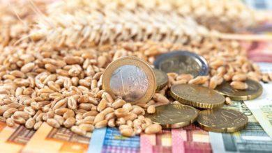 Photo of Hausse de l'aide couplée pour le blé dur au titre de la récolte 2019