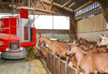 Photo of Déléguer l'alimentation des chèvres à un robot