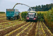 Photo of Du bon maïs en Nord-Finistère