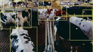 Photo of En élevage, la science avance
