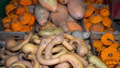 Photo of Il multiplie les graines de variétés anciennes