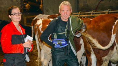 Photo of Ancien éleveur, Serge Michard forme à l'insémination