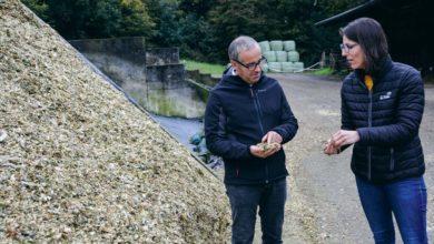 Photo of Maïs : Le grain denté farineux produit plus de lait à l'hectare