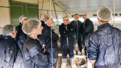 Photo of Faire découvrir la volaille bretonne aux acheteurs