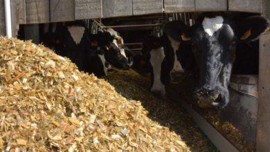 Photo of Des écarts d'ingestion suivant les matières sèches