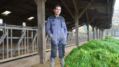 Photo of Produire du soja bio pour maintenir la production laitière hivernale