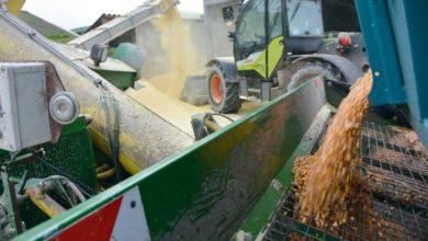 Photo of Maïs grain humide : Zéro déchet et stabilité avec les conservateurs