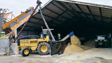 Photo of Un maïs grain humide bien conservé dans un ancien poulailler
