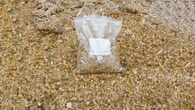 Photo of Que dit le bulletin d'analyse du maïs fourrage ?