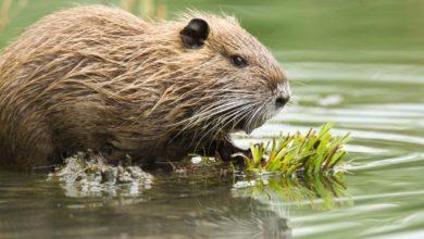 Photo of Des outils et actions pour réguler la faune sauvage