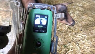 Photo of Voir ses chèvres à travers le prisme d'une caméra