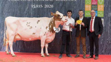 Photo of Concours Pie rouge Salon de l'Agriculture : Fidelor P au sommet