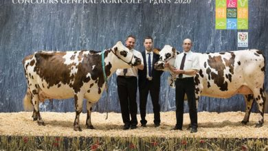 Photo of Concours Normande Salon de l'Agriculture : Indétrônable Hamilton
