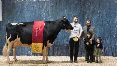 Photo of Concours Prim'Holstein Salon de l'Agriculture : Du Bon Vent Janna Cama prend le large