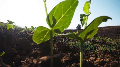 Photo of Phytosanitaire : La vente et le conseil sont désormais différenciés