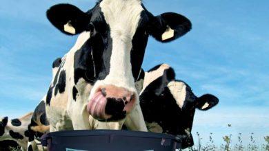 Photo of Nutrition bovine : Une transition sans perte de production