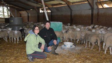 Photo of Agneau : Ils lancent une filière ovine Bleu Blanc Cœur