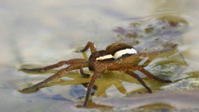Photo of Suivre le fil de l'araignée