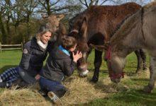 Photo of Les ânes aident des enfants à se (re)construire