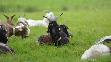 Photo of Des loups aux agneaux