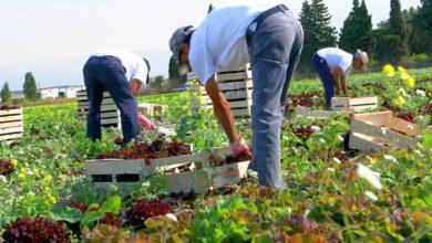 Photo of Un afflux de main-d'œuvre dans les champs