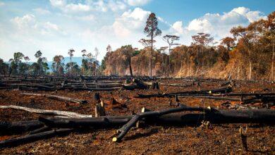 Photo of Zoonoses : Des pratiques écologiques en question