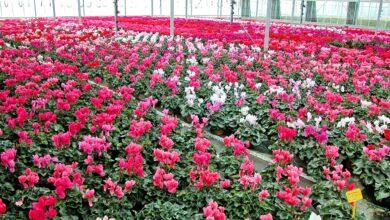 Photo of L'horticulture, sans chiffre d'affaires depuis 8 semaines