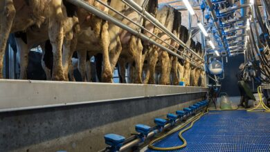 Photo of La dynamique laitière persiste