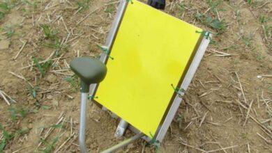 Photo of Caméras cachées contre insectes ravageurs