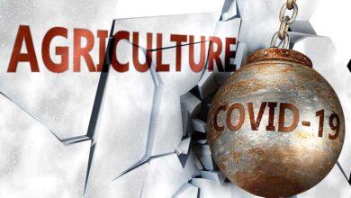 Photo of Le modèle agricole de l'après Covid-19 : Un autre monde, une gageure ?