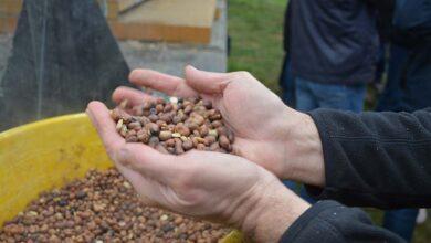 Photo of Des essais concluants pour réduire le soja