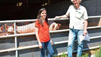 Photo of Du porc fermier sur paille